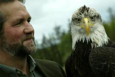 Eagles Flying at the Irish Raptor Research Centre